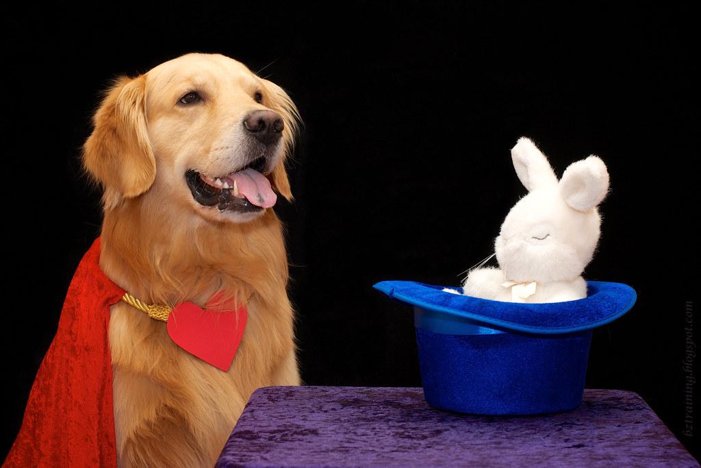 Idee Per Una Fanstatica Festa Di Compleanno Canina