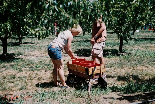A fruit picking we will go