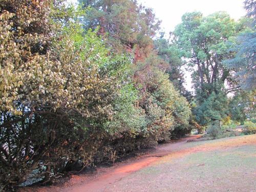 06-Quinta do Palheiro Ferreiro-19.07.12