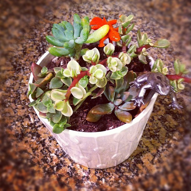 Orange lizard and silver frog are invading the tiny succulent pot that I made @karanoellawson #pinterestparty tonight.