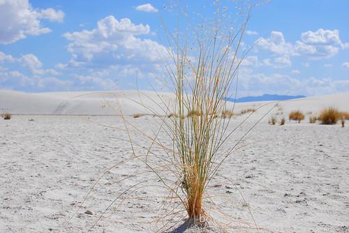 White Sands Natl Mon in New Mexico (6)