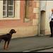 Gyurka és a kutyus by szirko