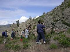 Looking for Canyon Wren Okanagan Valley British Columbia