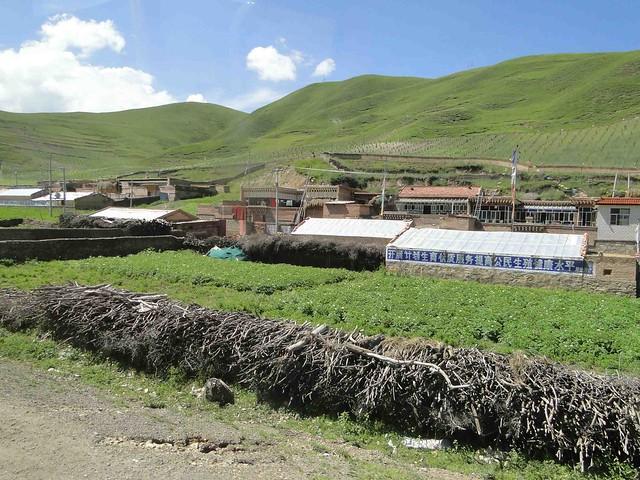 中國官方政策推動下,越來越多的牧民變成定居