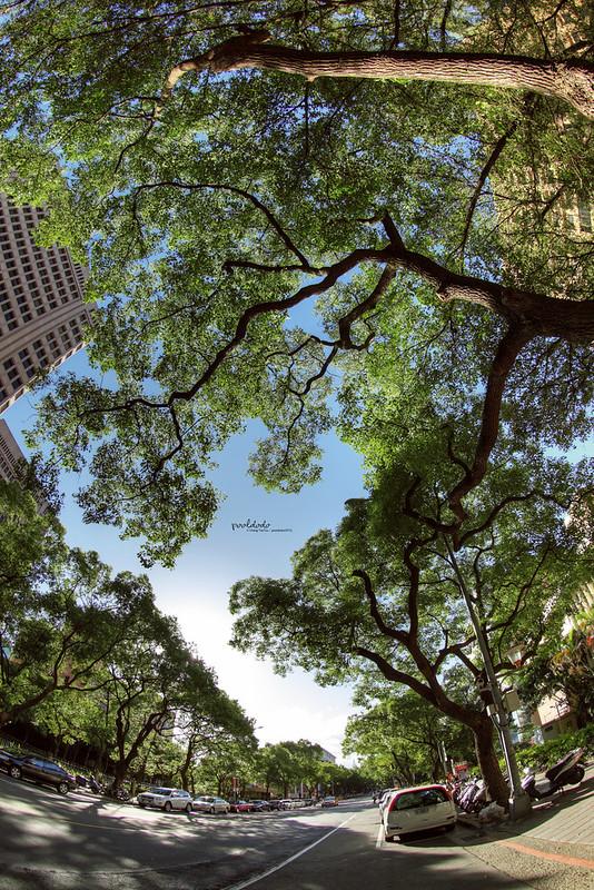 [urban] tree on the street