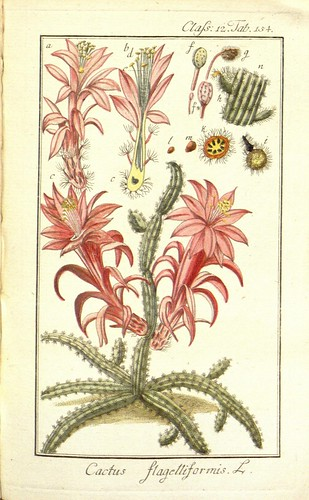 n77_w1150 by BioDivLibrary