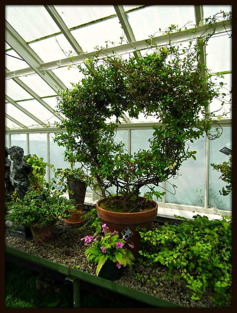 Buffalo Botanical Gardens Flickr Photo Sharing