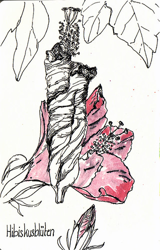 zusammengerollte Hibiskusblüte / hibiscus blossom by Inky's Journal