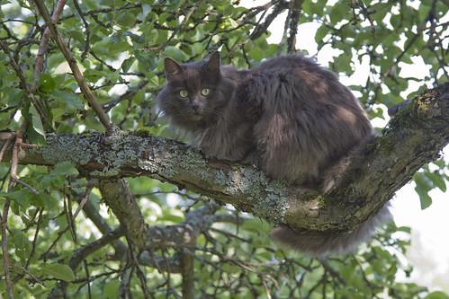 Veran kissa puussa by Anna Amnell