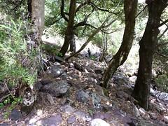 Trace cairnée de Tana di l'Orsu : vers l'arrivée en bas des éboulis sous le col 1150m