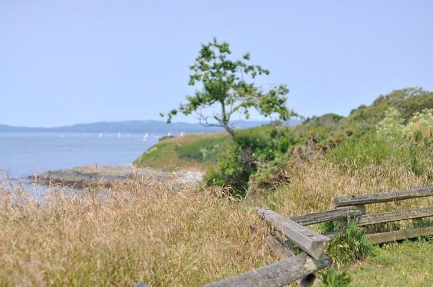 Beach-in-Victoria