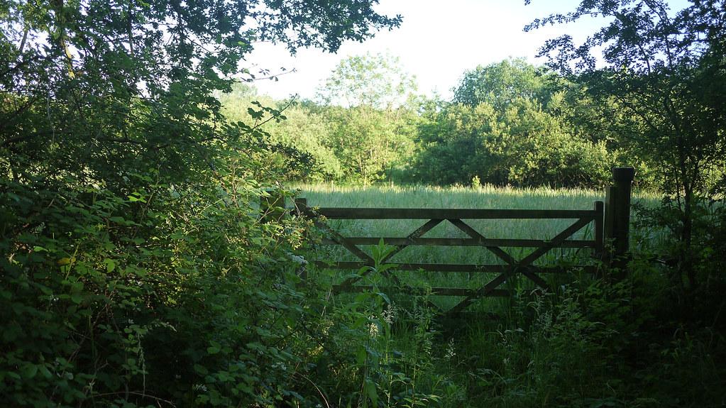 Surlingham Marsh