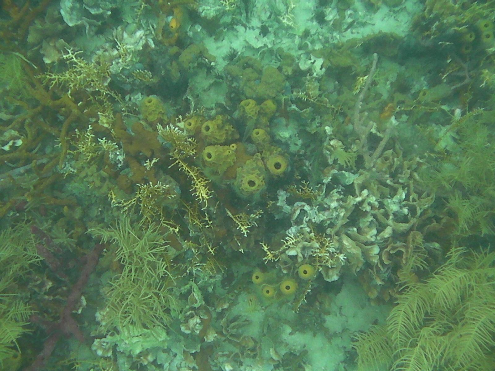 Corales de Colores del Arrecife bocas del toro - 7598225500 8d9e955342 o - Bocas del Toro, escondido destino vírgen en Panamá