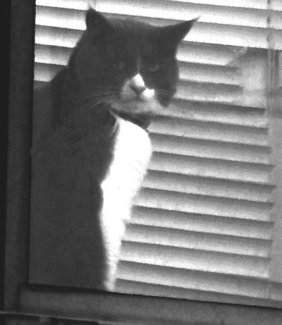 06-24-2010_Cat watching
