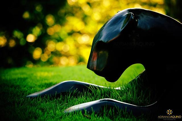 A Pantera // The Panther
