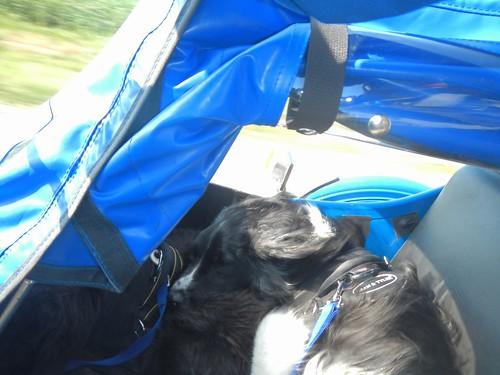 Ben resting on Bandido
