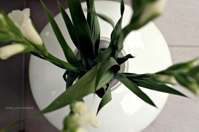 gladiolen_2
