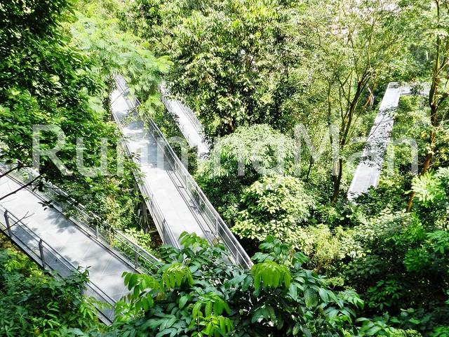 Telok Blangah Hill Park & Henderson Waves 10