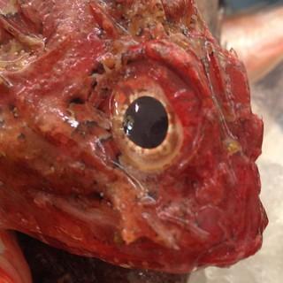 Roqueo de mirada limpia #sinfiltros #nofilters #fish #eye