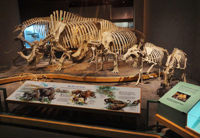 dinosaur-skeletons
