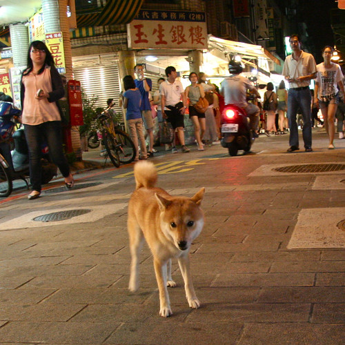 5 August 2012 Free-roaming night market Shiba
