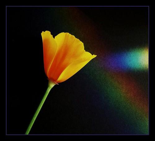 110_0800 by trev.pix