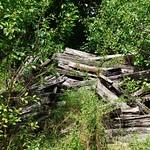 lost wood