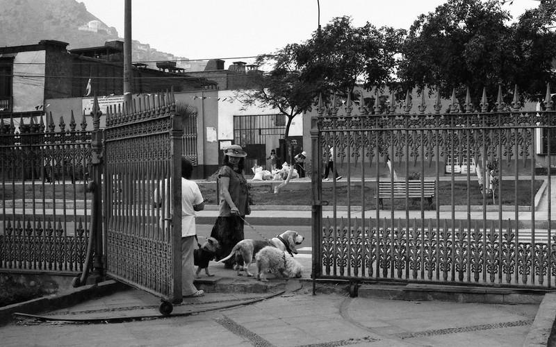 Fotografía convencional, Lima en rollo: La dama de los perros, Rímac- Perú.