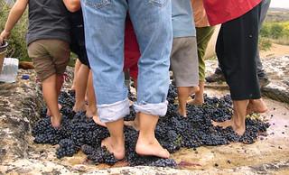 Pisando la uva.