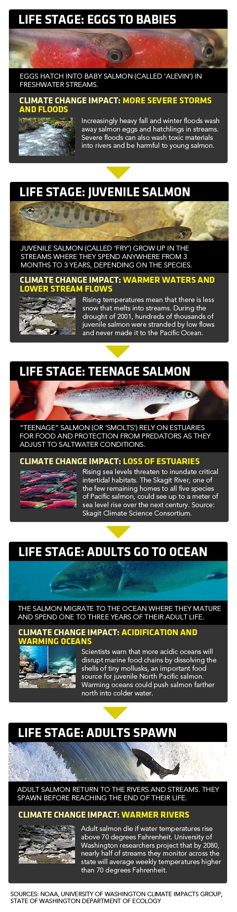 Climate Change Effects on Salmon