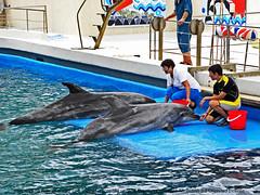 Dolphins performing in Constanta, Romania