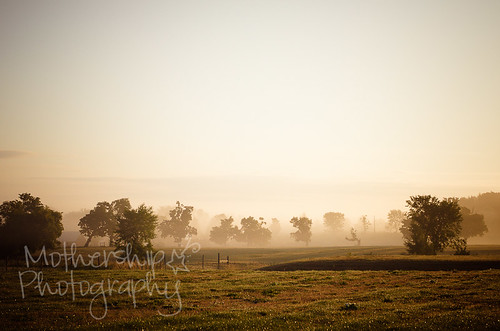 Foggy sunrise_