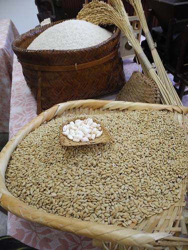 台灣晶鑽,台南16號水稻品種上市,口感超越日本越光米。