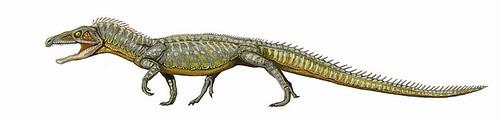 800px-ProterosuchusDB