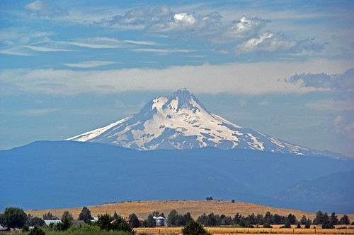 a350 033 (2)Mt. Hood from Kelly Farms