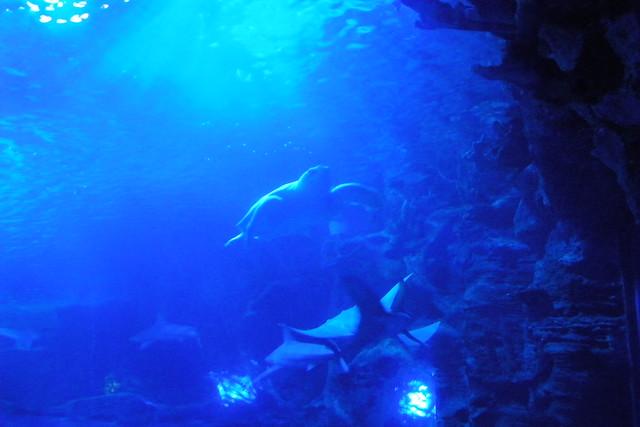 Image Result For Cincinnati Aquarium