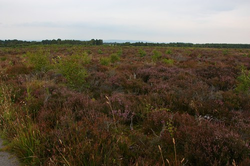 Heather at Culloden Battlefield