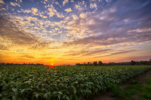 sunset sky field clouds rural cloudy farm country indiana bean