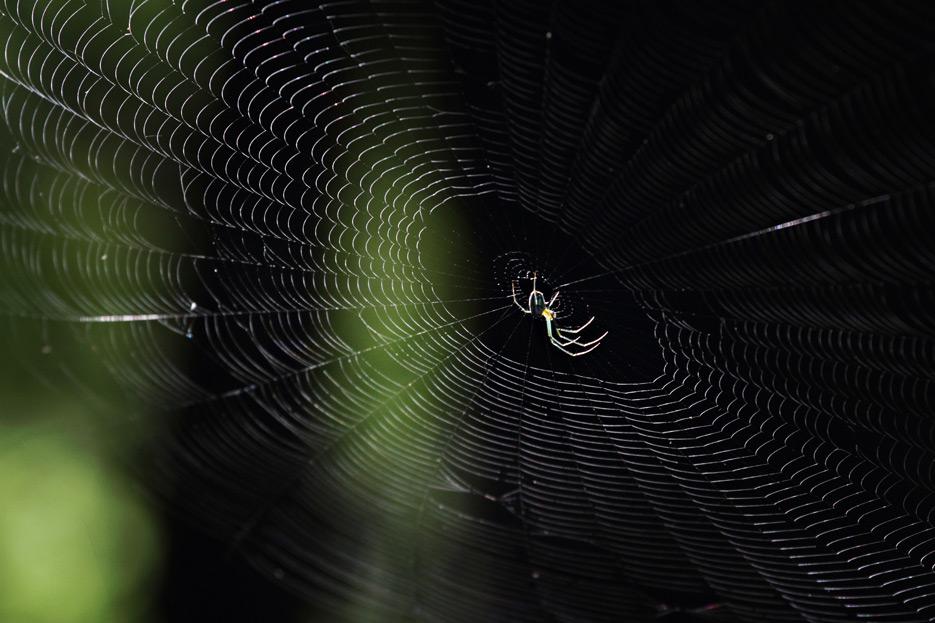 072612_04_bug_spider05