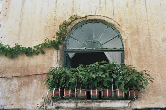 Little Eggplants - Positano - Italy