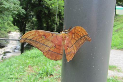 stunning moth