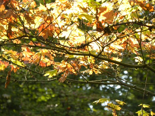 Autumn leaves in sun