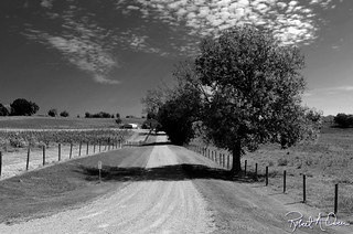 road-tree-bw