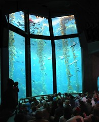 Monterey Bay Aquarium Kelp Forest Tank