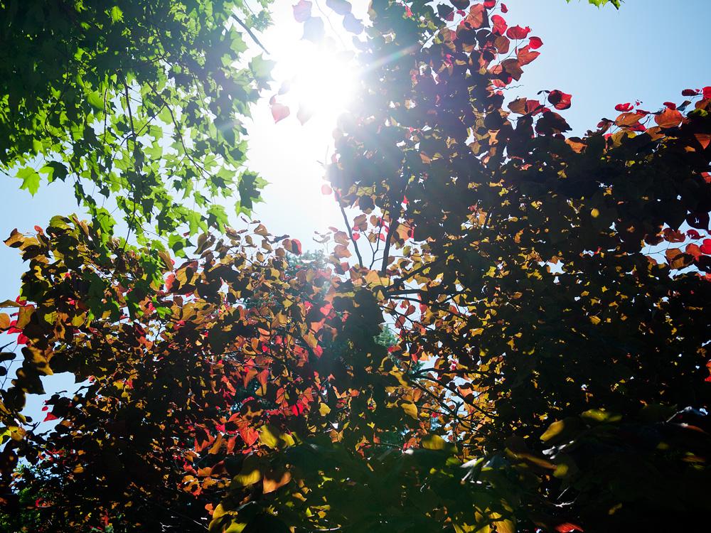Arnold Arboretum 5