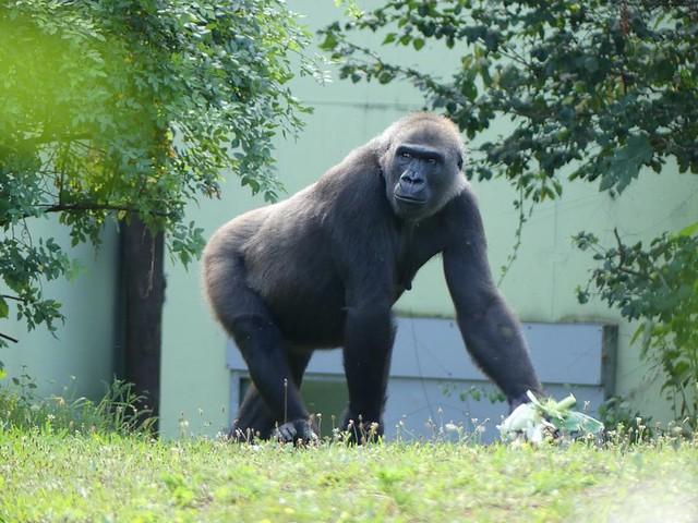 Dian, Zoo Frankfurt