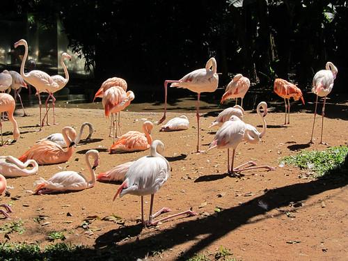 Le Parc des Oiseaux d'Iguaçu: d'autres flamants roses acrobates.