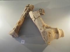 carving(0.0), art(0.0), antler(0.0), driftwood(0.0), wood(0.0), sculpture(0.0), horn(0.0), bone(1.0),