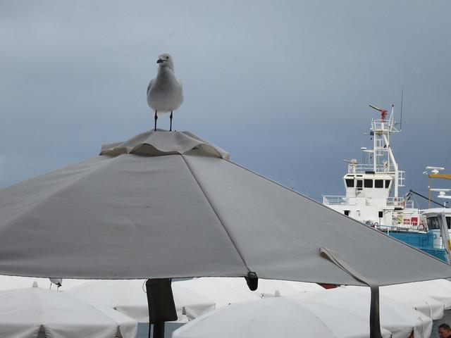 View from Cicerrelos restaurant, Fremantle