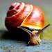 snail-face by Jäger & Sammler